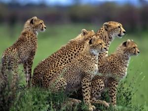 cheetah hluhluwe map