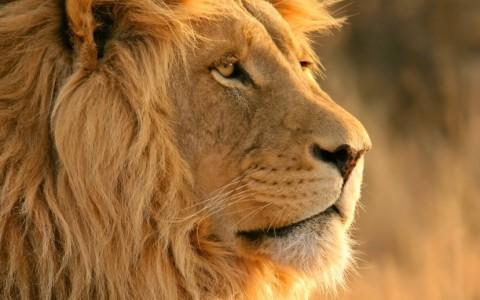 Imfolozi The Primitive Guided Walking Safari