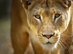 hluhluwe game reserve 2 night safari package