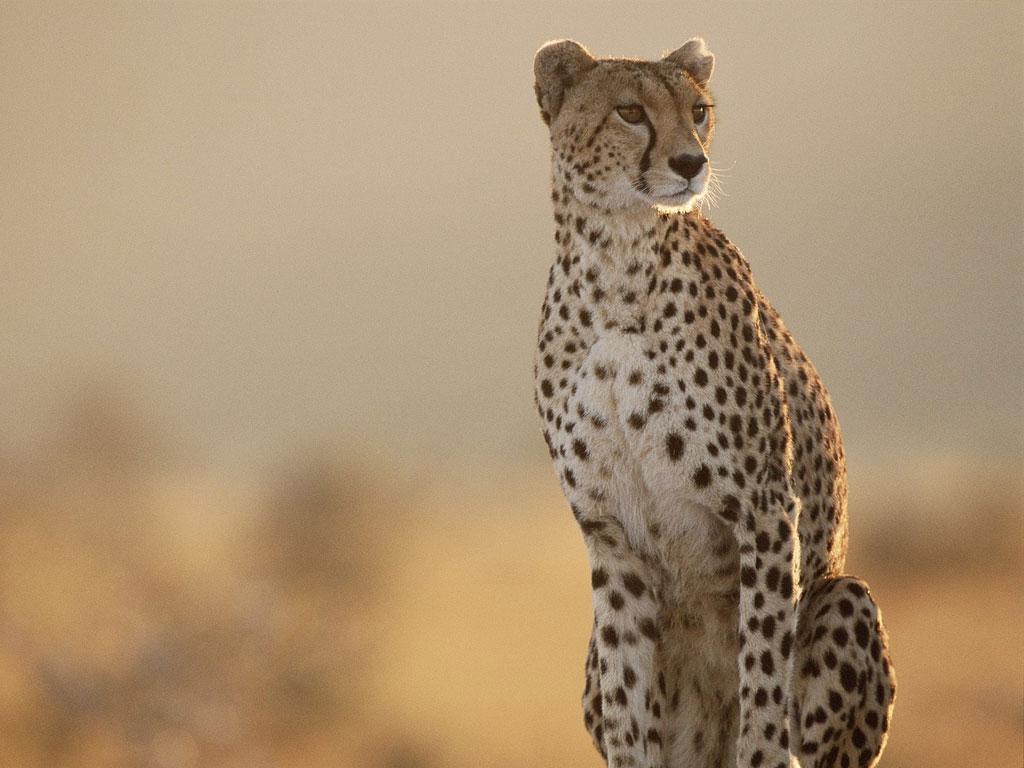4 Night Zululand Safari 2