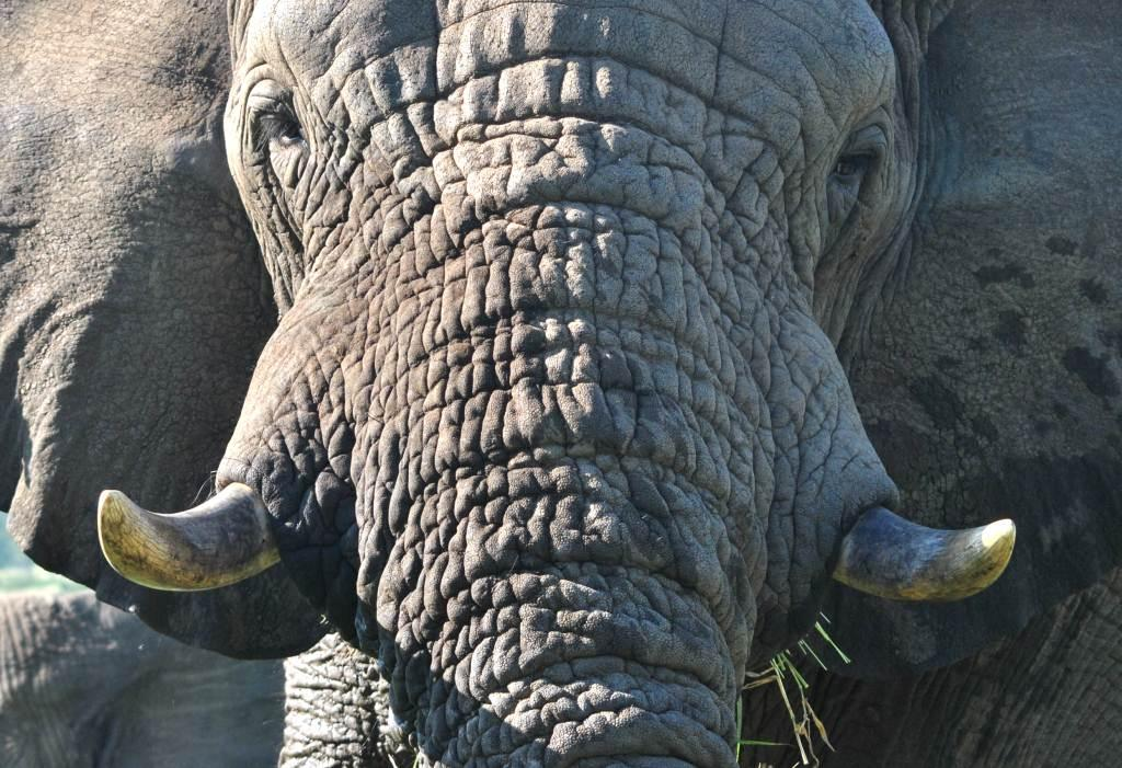 Day Safaris in and Around Zululand 2
