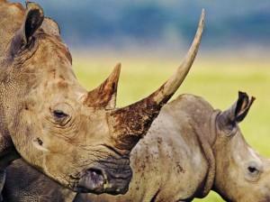 rhino hluhluwe game reserve